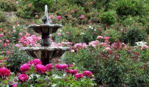 Nehru-Rose-Garden-In-Ludhiana